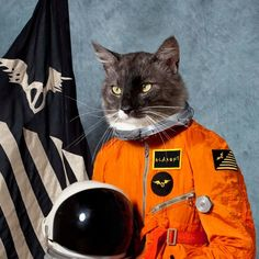 cat in outer space.