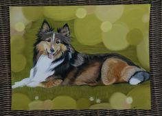 Portrait de Berger des shetlands Artiste animalier La Galerie de Julie