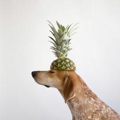 Dog puppy cachorro abacaxi