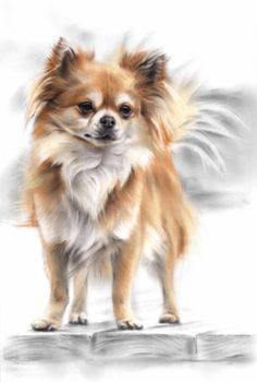 Conté Pastel Portrait of Chihuahua Katja Turnsek
