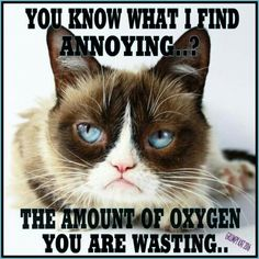 Another Grumpy Cat meme by the other Grumpy Kat 2017 Grumpy Cat makes sure it stays that way Grumpy Cat Quotes, Funny Grumpy Cat Memes, Funny Animal Memes, Funny Animal Pictures, Funny Cats, Funny Animals, Cute Animals, Grumpy Cats, Funny Memes