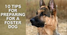 Tips for bringing home a foster dog