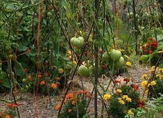 Greenhouse Gardening, Garden Planters, Garden Art, Home And Garden, Culture Tomate, Potager Bio, Image Categories, Garden Types, Permaculture