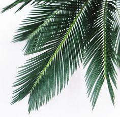 ferns Planting Succulents, Planting Flowers, Tree Wallpaper Iphone, Plant Aesthetic, Nature Plants, Tropical Landscaping, Landscape Prints, Tropical Vibes, Leaf Art