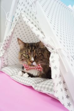 Dog And Teepee - more than just a dog bed. We've created a space that your fur babies will love calling home. Cat Teepee, Teepee Bed, Teepees, Pet Furniture, Take A Nap, Cat Love, Dog Bed, Daydream, Hanging Out