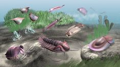 cambrian monstar