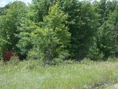 Graham Real Estate :: Northern Michigan Real Estate Sales - 1841 S Hurd Lane Harbor Springs MLS Number 446095