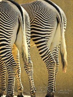 Beautiful zebra butts!!!