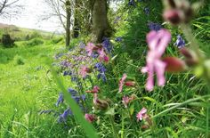 Wildflowers fill the Hedgerows in Springtime.
