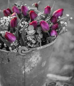 With lots of love Black And White Background, Black And White Colour, Black And White Pictures, Splash Photography, Color Photography, Black And White Photography, Beautiful Flowers Pictures, Love Flowers, White Flowers
