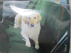 Car Seat Cover for Pets >>> For more information, visit image link. (This is an affiliate link and I receive a commission for the sales)