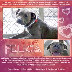 CARSON URGENTS - FELICIA -#A4883681 I'm an approximately 1 year old female pit bull. I am not yet spayed. I have been at the Carson Animal Care Center since October 1, 2015. I will be available on October 9, 2015. You can visit me at my temporary home at CRECEIVING. https://www.facebook.com/savingcarsonshelterdogs/photos/a.172032662969376.1073741830.171850219654287/486257224880250/?type=3&theater