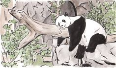 Cathy Marlow will be taking part in Royal Parks Half marathon for Team Panda in October.  She has done several amazing drawings to raise money for WWF -Thank you Cathy!  Click on the link below to sponsor Cathy https://www.justgiving.com/supportwwf
