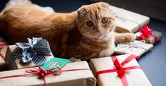 They say you should never look a gift horse in the mouth, but finding flaws in holiday presents could save pet parents an unexpected trip to the vet—and a blow to their budgets. Petplan claims data shows that treatments during a holiday week can cost twice as much (or more!) than at other times of […] The post The Holiday Gifts You Hate Getting Can Also Make Your Pet Sick appeared first on The Catington Post.