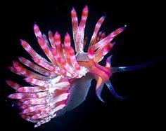Nudibranch, aka Sea Slugs   ;)