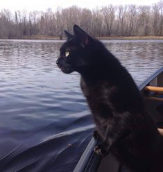 "* * "" I don'ts like dis lake. It reminds meez of dat movie: ' What Lies Beneath'. """