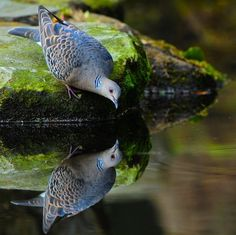 Reflections=Sweet!!!