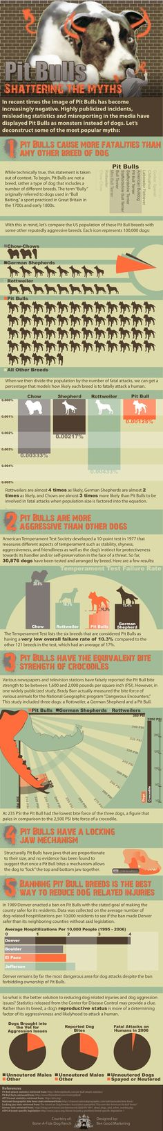 Pit Bull Myths Shattered Infographic