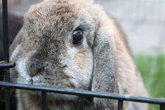 Lovely Bunny Ann #Bunny #Rabbit