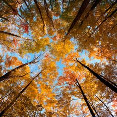 Fall canopy in Bracebridge, Ontario Get Outside, Landscape Photographers, Autumn, Fall, The Great Outdoors, Mother Nature, Places To See, Backdrops, Beautiful Places