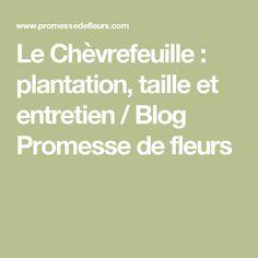 Le Chèvrefeuille : plantation, taille et entretien / Blog Promesse de fleurs