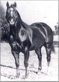 Sugar Bars | Sugar Bars ~ Quarter Horse Legend