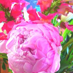 """Reminds me of my grandmother.  She had a pink peony bush and loved it every spring.  She would make bouquets of them for the family graves on """"Decoration Day."""""""