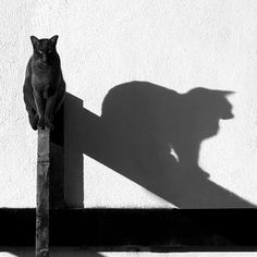 harvestheart:    Me and My Shadow - Tina Ind  black cat abstract