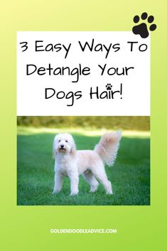 How To Prevent Goldendoodle Matting: 3 Must Own Dog Brushes – Goldendoodle Advice Goldendoodle Haircuts, Goldendoodle Grooming, Mini Goldendoodle Puppies, Fluffy Puppies, Pet Grooming, Goldendoodles, Havapoo Puppies, Goldendoodle Names, Labradoodle