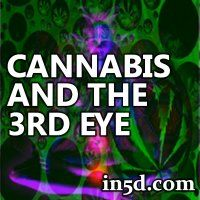 The Pineal Gland or the 'Seat of the Soul' as described by Rene Descartes, is the focal point of our spiritual guiding system which makes us go beyond the five senses of rationality and become multisensory, tuned into and aware of higher dimensions of consciousness within a holographic cosmos. Cannabis or Marijuana among other psychedelics facilitates the activation of the pineal gland and helps turn on the third eye or the mind's eye directing our spiritual evolution to wholeness.