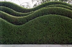 An interesting way to create a contemporary and stylish statement - a hedge with a difference.  Yew (Taxus baccata) would be the best plant for this purpose.