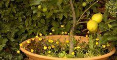 4090 best vaso di vetro images on pinterest art nouveau for Coltivare more in vaso