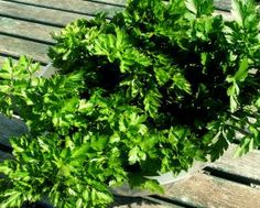 How to make persillade from your parsley | Permaculture Magazine