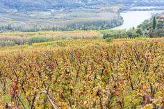 Route gourmande des vignobles des Côtes du Rhône