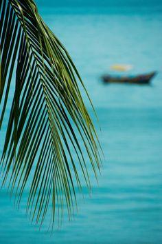 Tropical Paradise. #aqua #teal #turquoise