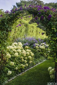 A gate leads to a walled shade garden planted with crepe myrtle, ferns, and lily of the valley. From there, a winding path lined with boxwood is punctuated with bright yellow ginkgo trees.