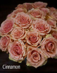 Sisapamba Roses, Cinnamon Peach Rose                                                                                                                                                                                 More