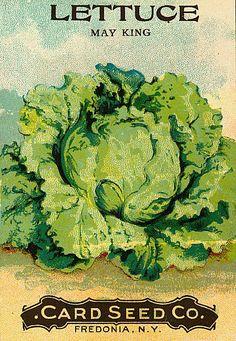 Vintage Labels Lettuce Seed Pack Greeting Cards - For the gardener. Vintage seed pack for lettuce Vintage Diy, Images Vintage, Vintage Labels, Vintage Ephemera, Vintage Cards, Vintage Packaging, Vintage Stuff, Vintage Prints, Vintage Posters