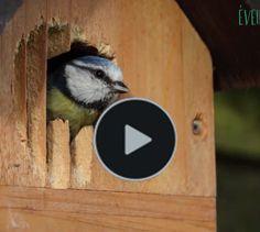 Rustic Gardens, Bird Houses, Outdoor Decor, Diy, Garden, Birdhouse Craft, Homemade Bird Feeders, Bricolage, Birdhouses