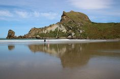 Spring morning at Deliverance Cove Wairarapa New Zealand