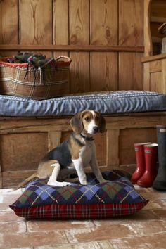 Are you interested in a Beagle? Well, the Beagle is one of the few popular dogs that will adapt much faster to any home. Art Beagle, Beagle Puppy, I Love Dogs, Cute Dogs, Mans Best Friend, Best Friends, Loyal Friends, Animals And Pets, Cute Animals