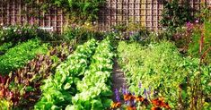 Herb garden design ideas herb garden planner steps to a successful garden design small vegetable and Home Grown Vegetables, Planting Vegetables, Organic Vegetables, Growing Vegetables, Vegetable Garden For Beginners, Backyard Vegetable Gardens, Gardening For Beginners, Potager Garden, Veg Garden