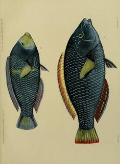 Journal des Museum Godeffroy. - Biodiversity Heritage Library