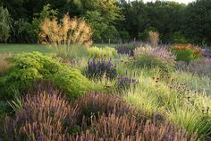 garden by Piet Oudolf  (need i say more?!)