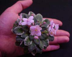 Pink Dove - миниатюризированная розетка легко умещается на ладони