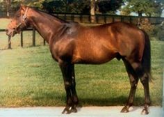 Cox's Ridge (USA) 1974-1998 B.h. (Best Turn (USA)-Our Martha (USA) by Ballydonnel (GB) 1st Metropolitan H (G1), Excelsior H (G2), Oaklawn H (G2), Discovery H (G3), Minuteman H (G3), Queen's County H (G3), Razorback H (G3), Stuyvesant H (G3) Stood at Claiborne Farm, KY. Sire of 49 SWS (6%); broodmare sire of 94 SWS (4%). Sire of champions Life's Magic & Cardmania, G1 winners De Roche, Little Missouri, Lost Mountain, Pine Circle, Scuffleberg, Twilight Ridge, Sultry Song, Vanlandingham