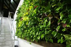 The installation of greenery within indoors environment can impart a much-needed…