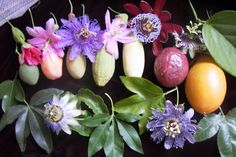 passion flowers and fruits
