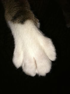 """We like to call this...""""The Paw"""""""
