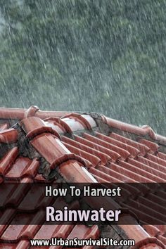 It might be impossible to store all the water you need, which is why you should learn how to harvest rainwater.